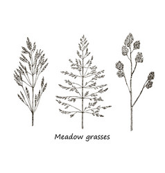 Set of ink drawing cereals wild plants field vector