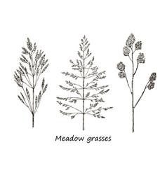 set of ink drawing cereals wild plants field vector image