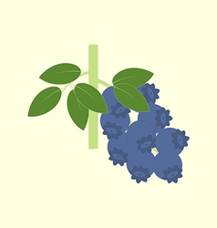 Blueberry Berry Icon vector image