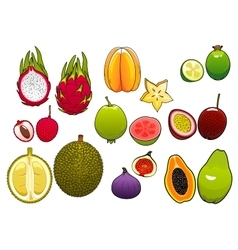 Whole and halved fresh tropical fruits vector