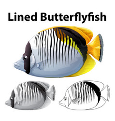 Drafting character for lined butterfly fish vector