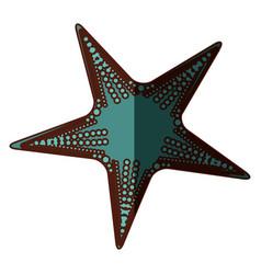 white background with aquamarine starfish and vector image