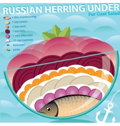 Recipe of herring under fur coat vector
