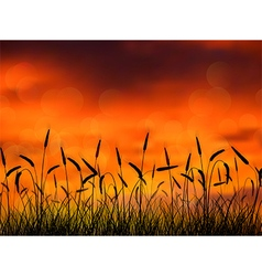 Silhouette of wheat when of sunset vector