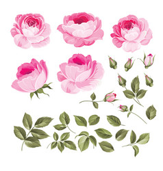 vintage roses set vector image vector image