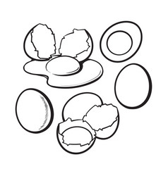 Whole and cracked broken shell chicken egg vector