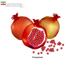 Ripe pomegranate a popular fruit in iran vector
