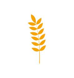 Healthy wheat organ plant nutricious vector