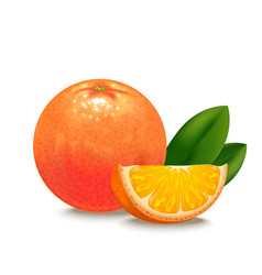 Realistic detailed orange citrus fruit vector