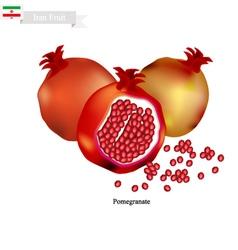 Ripe pomegranate a popular fruit in iran vector