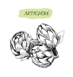 Artichoke vector