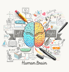 Human brain diagram doodles icons style vector image vector image