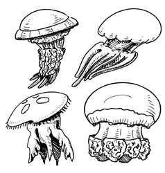 Jelly fish collection vector image vector image