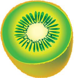 Kiwi fruit vector