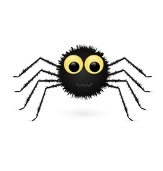 Spider isolated on white background vector image