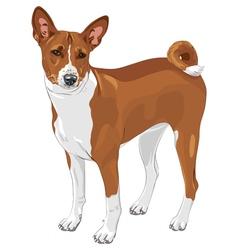 Basenji hunting dog vector