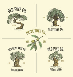 Olive and pine tree logos engraved or hand drawn vector