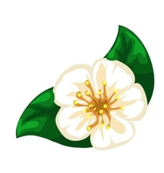 White blooming apple flower closeup vector