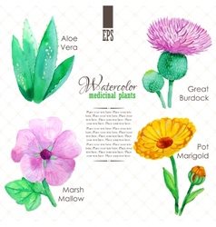 Set of watercolor madicinal plants vector