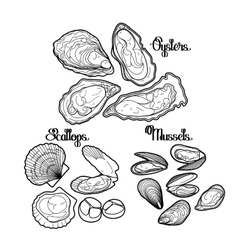 Graphic mussels oysters and scallops vector