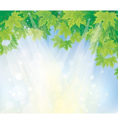 green leaves on blue sky vector image