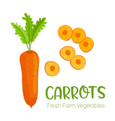 carrots isolated on white background vector image vector image
