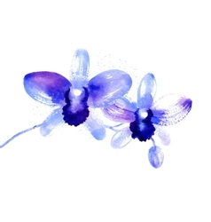 Branch of blue watercolor orchids vector