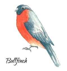 The bullfinch sits on the tree branch vector