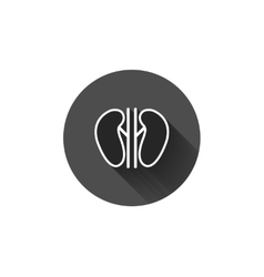 kidneys icon vector image