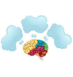 Human brain and three bubbles vector