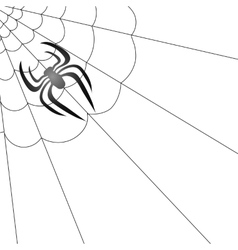 Poisonous spider and her cobweb vector