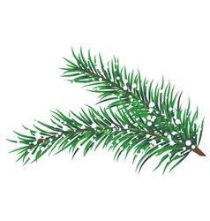 Fir tree branch snow vector image