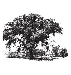 Field elm vintage vector