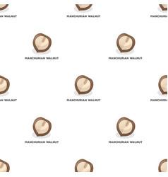 Manchurian walnutdifferent kinds of nuts single vector