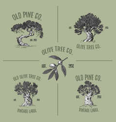 olive and pine tree logos engraved or hand drawn vector image