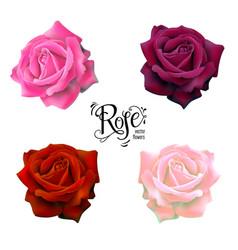 Roses flowers set vector