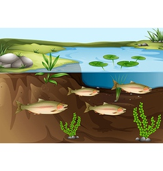An ecosystem under the pond vector