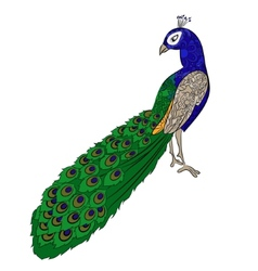 Hand drawing peacock vector