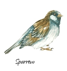 The sparrow on white background vector image vector image