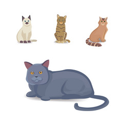 Collection cats of different breeds isolated cat vector