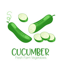 cucumber isolated on white background vector image vector image