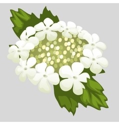Delicate wreath of white flowers and leaves vector