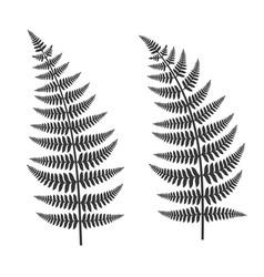 Fern leaf set vector