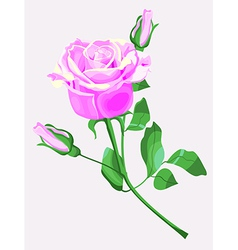 Ornate of pink rose vector