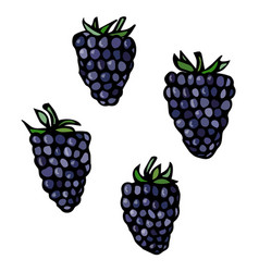 blackberry doodle style sketch isolated on vector image vector image