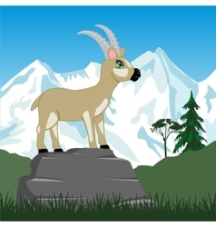 Wild sawhorse in mountain vector image