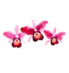 Branch of red watercolor orchids vector image