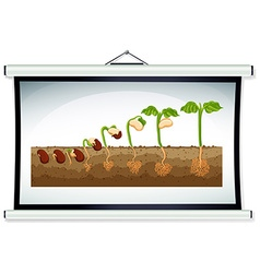 Chart showing the growing of plant vector image vector image
