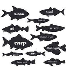 Commercial fish silhouettes with names vector