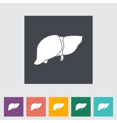 liver vector image vector image